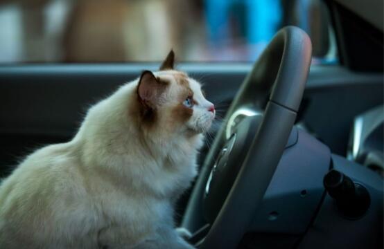 这波情绪营销 , 让一只猫刷屏了…